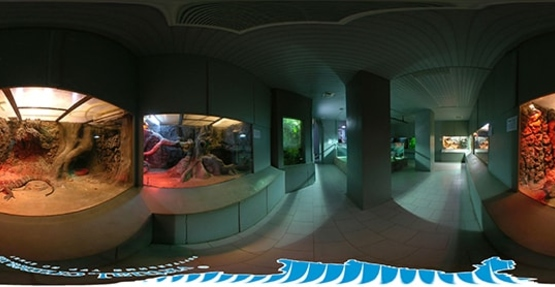 Aquarium-Museum of the Institute of Biology of the Southern Seas